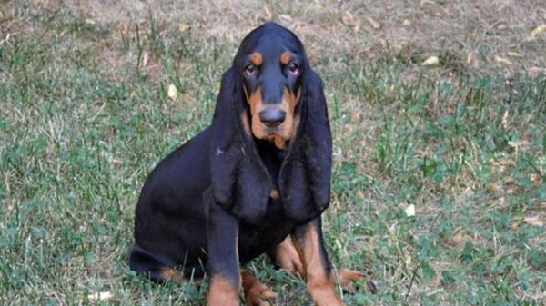 این سگ گوش های خر را دارد